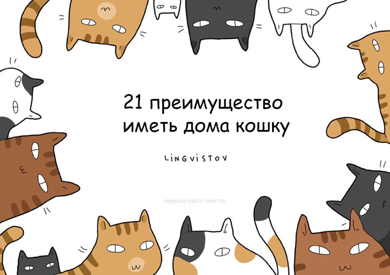 21 преимущество иметь дома кошку