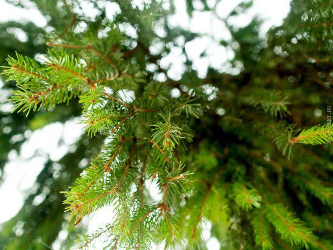 Мужские забавы под Новый год: как добыть елку